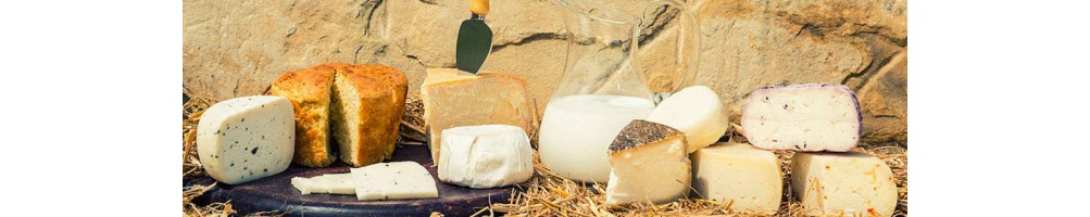 Dairy products and pecorino cheeses  | Tasting Marche