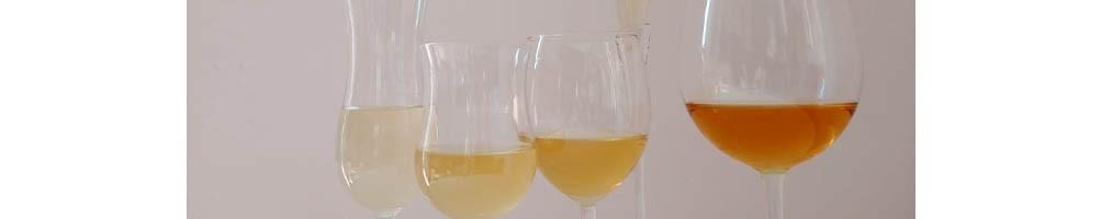Vini Bianchi delle Marche - Vino Marchigiano Online - Tasting Marche