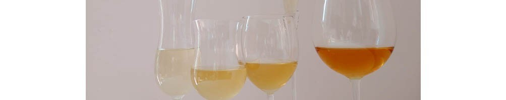 Italian White Wine from Marche Region - Shop Online Tasting Marche